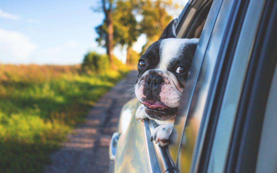 Cómo eliminar los malos olores del coche